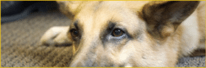 WeCo Webaccess Tester's Guide Dog
